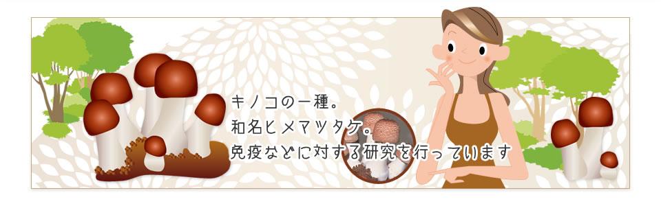 キノコの一種。和名ヒメマツタケ。免疫などに対する研究を行っています。