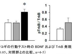 「エゾウコギは自律神経調節および海馬BDNFシグナル伝達系の活性化を介して抗不安作用を発揮する」が学術誌「 Molecules」(2017インパクトファクター:3.098)に掲載されました。